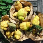 Quinces on Patchwork Farm Stall